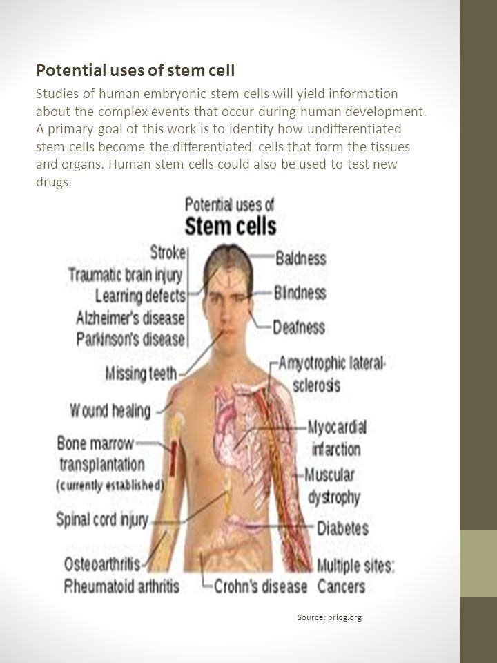 Potential uses of stem cell