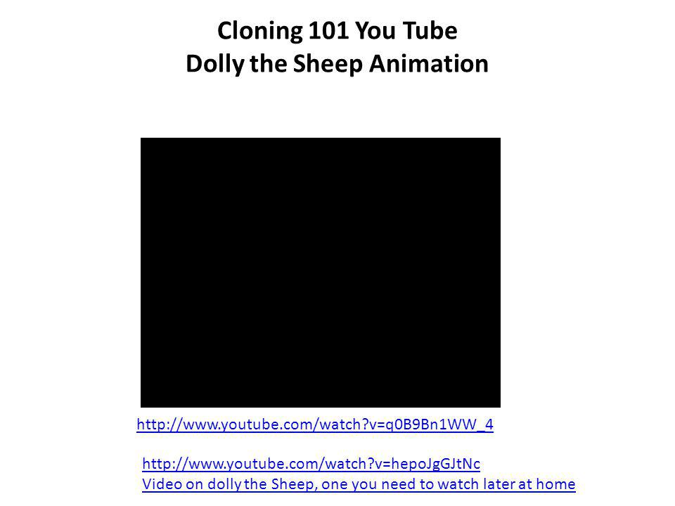 Cloning 101 You Tube Dolly the Sheep Animation
