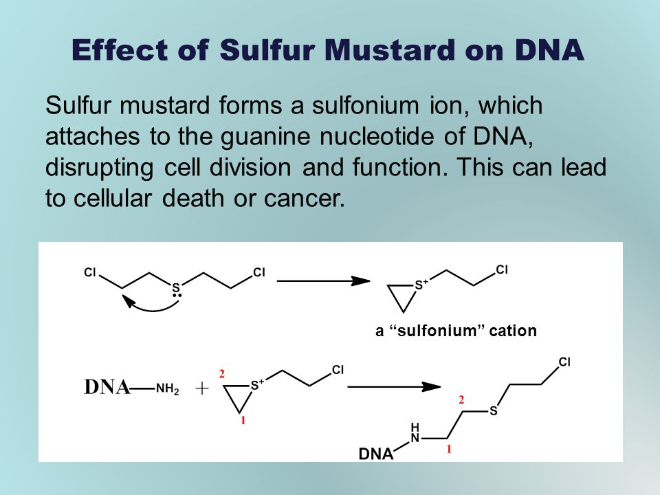 Effect of Sulfur Mustard on DNA