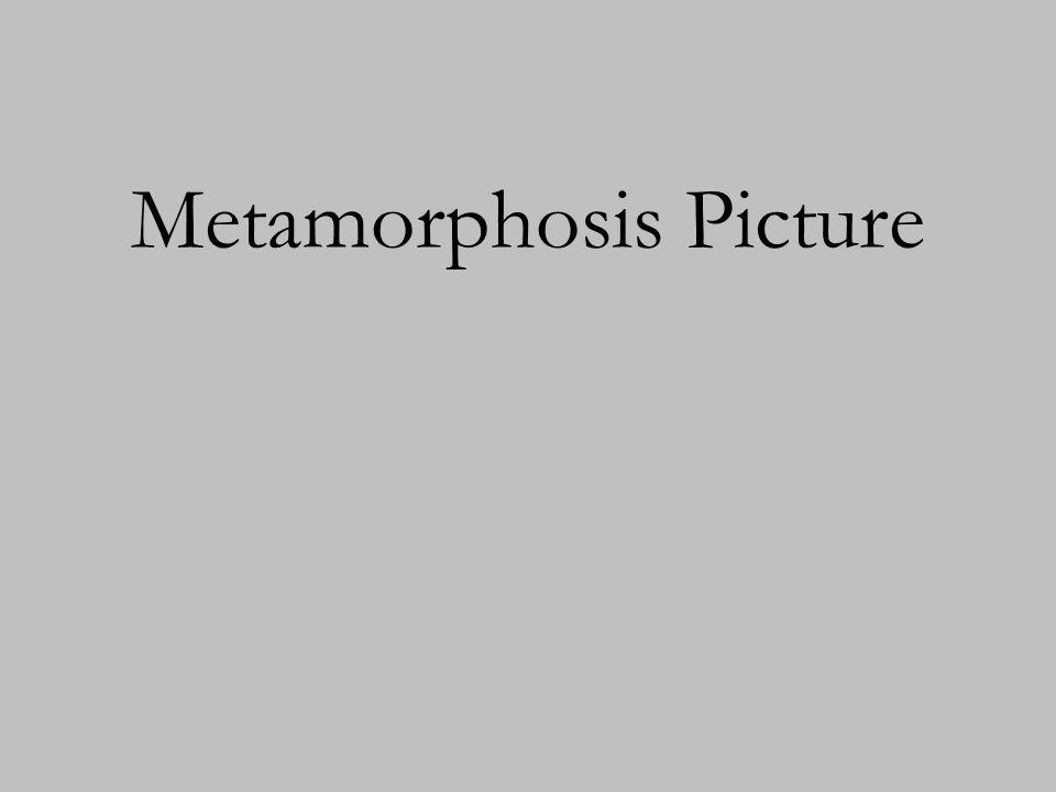 Metamorphosis Picture