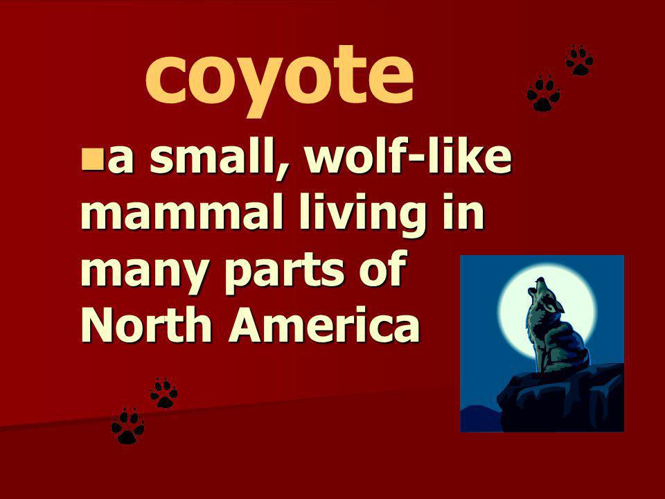 a small, wolf-like mammal living in many parts of North America