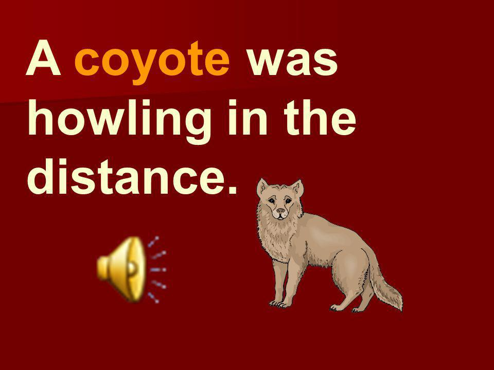 A coyote was howling in the distance.