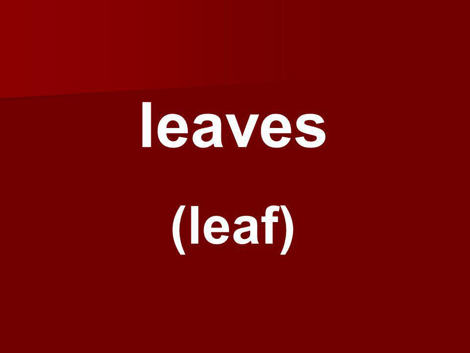 leaves (leaf)