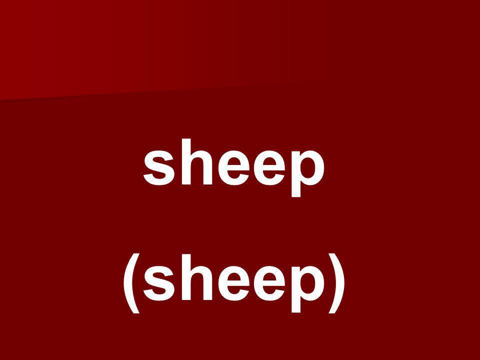 sheep (sheep)