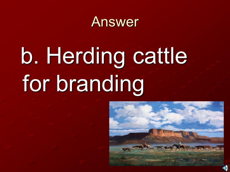 b. Herding cattle for branding