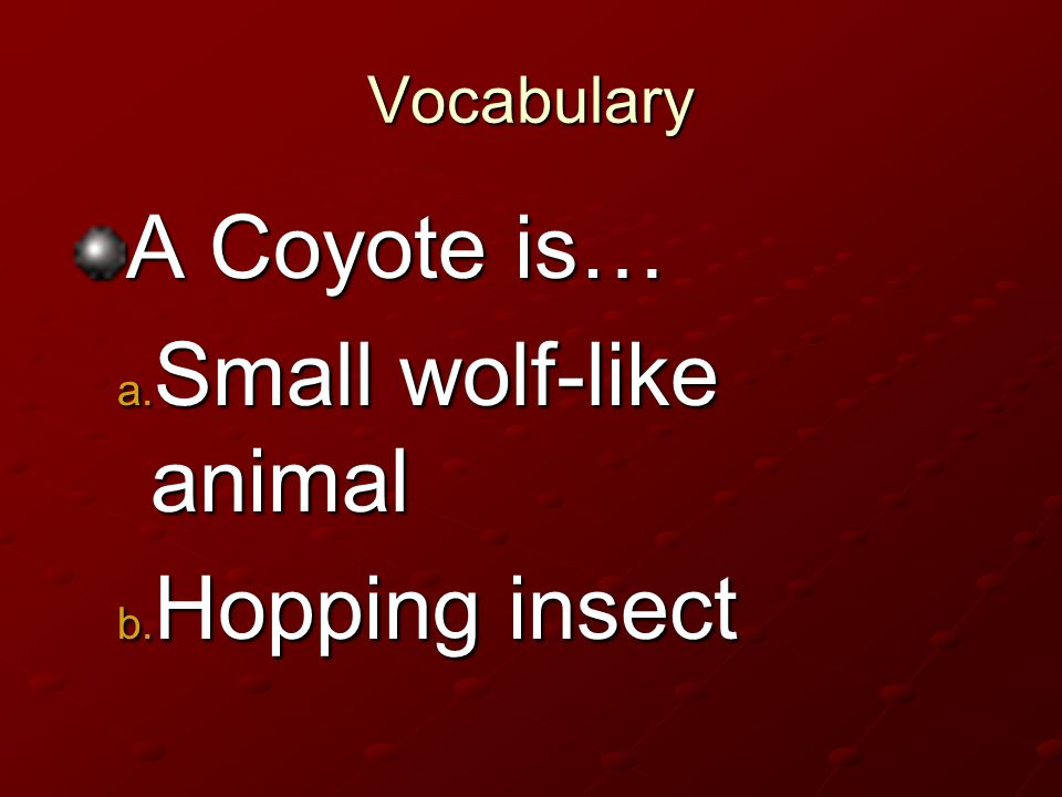 Small wolf-like animal Hopping insect