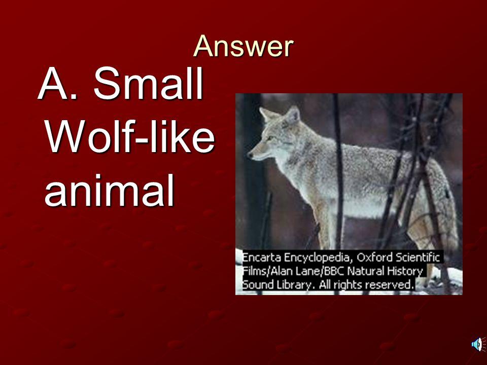 A. Small Wolf-like animal