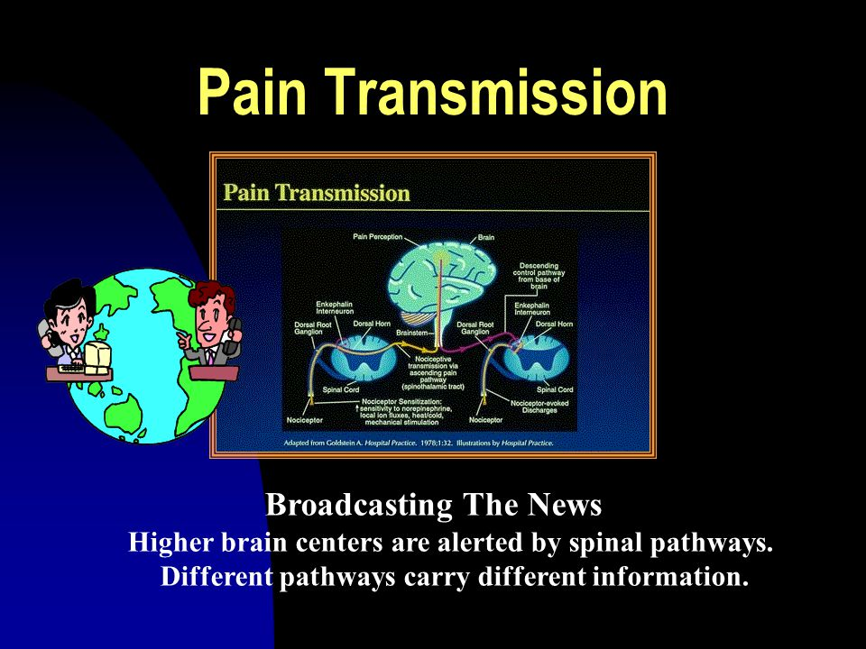 Pain Transmission Broadcasting The News