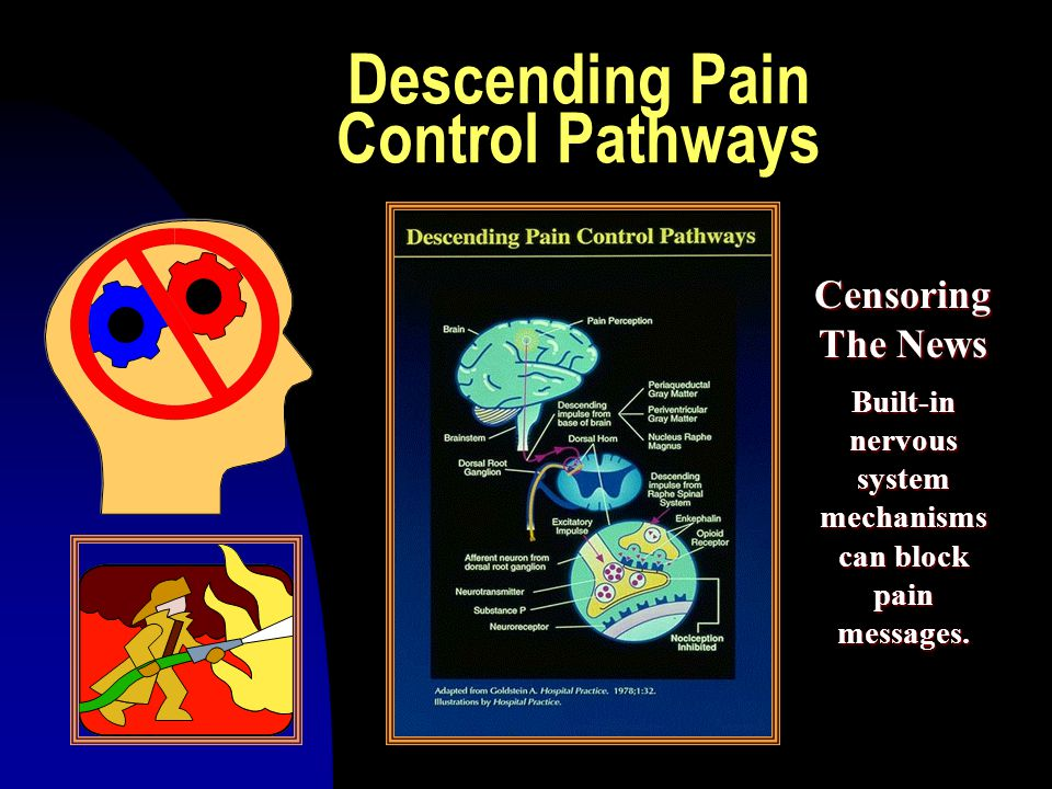 Descending Pain Control Pathways