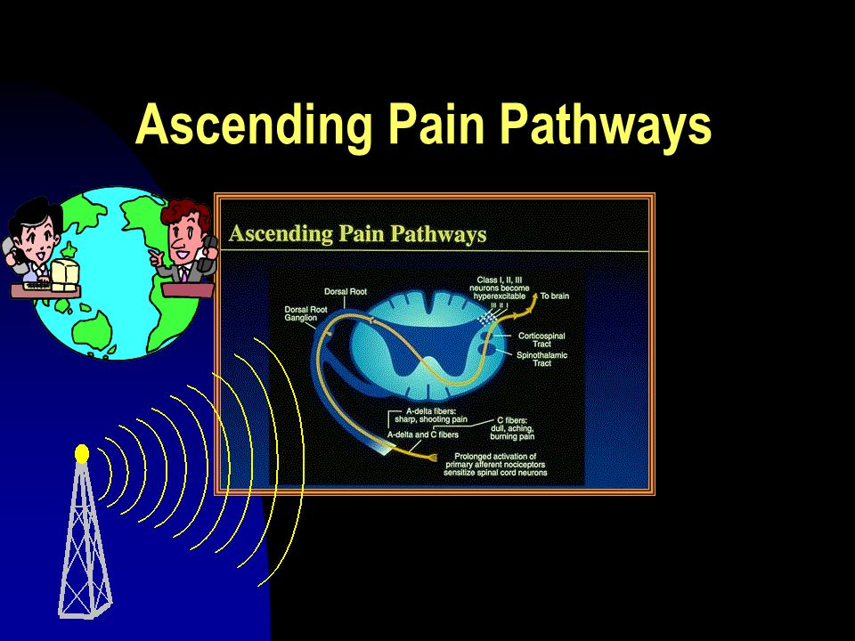 Ascending Pain Pathways