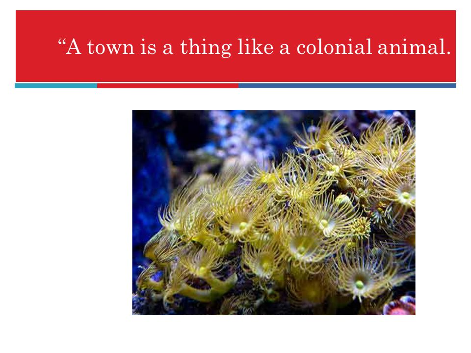 A town is a thing like a colonial animal.