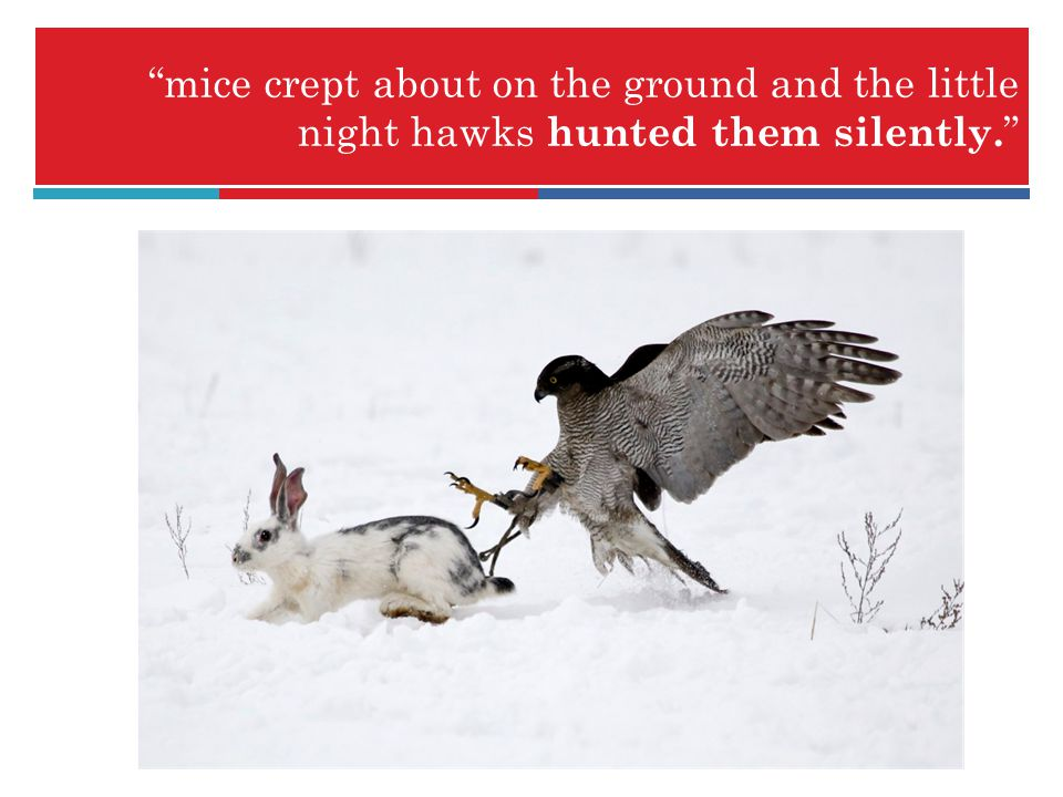 mice crept about on the ground and the little night hawks hunted them silently.