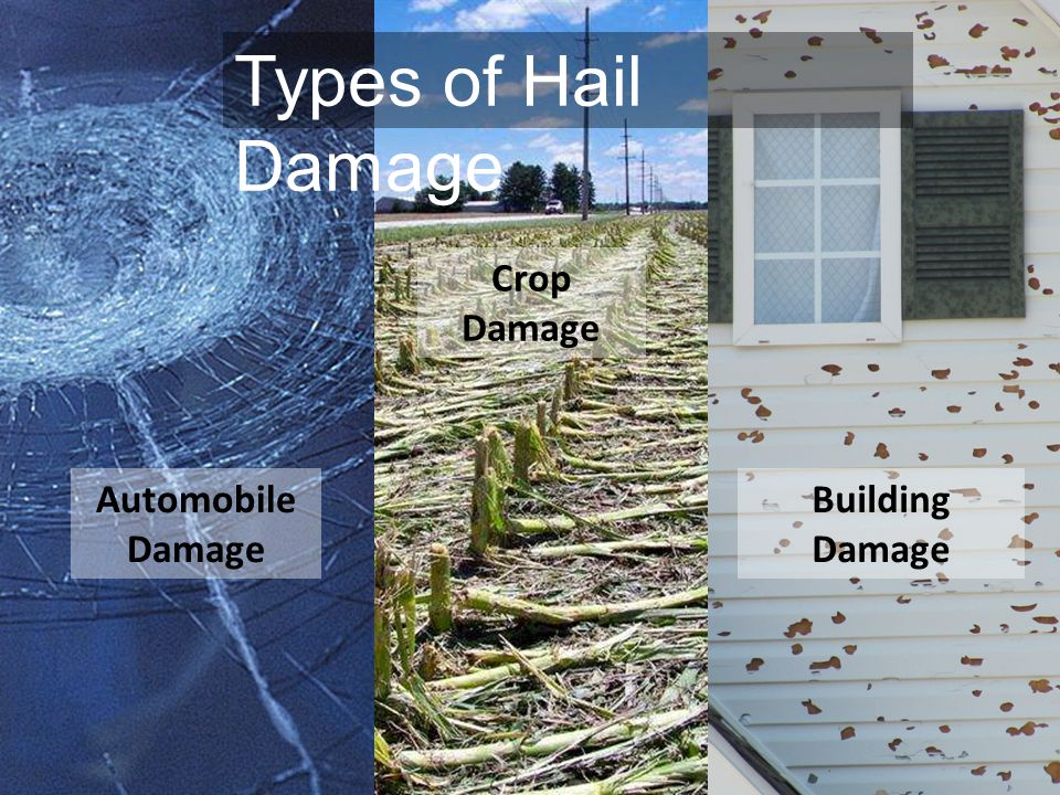 Types of Hail Damage Crop Damage Automobile Damage Building Damage