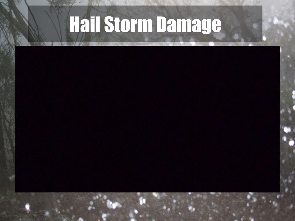 Hail Storm Damage