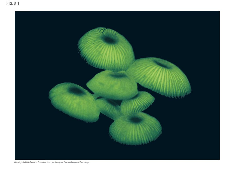 Fig. 8-1 Figure 8.1 What causes the bioluminescence in these fungi