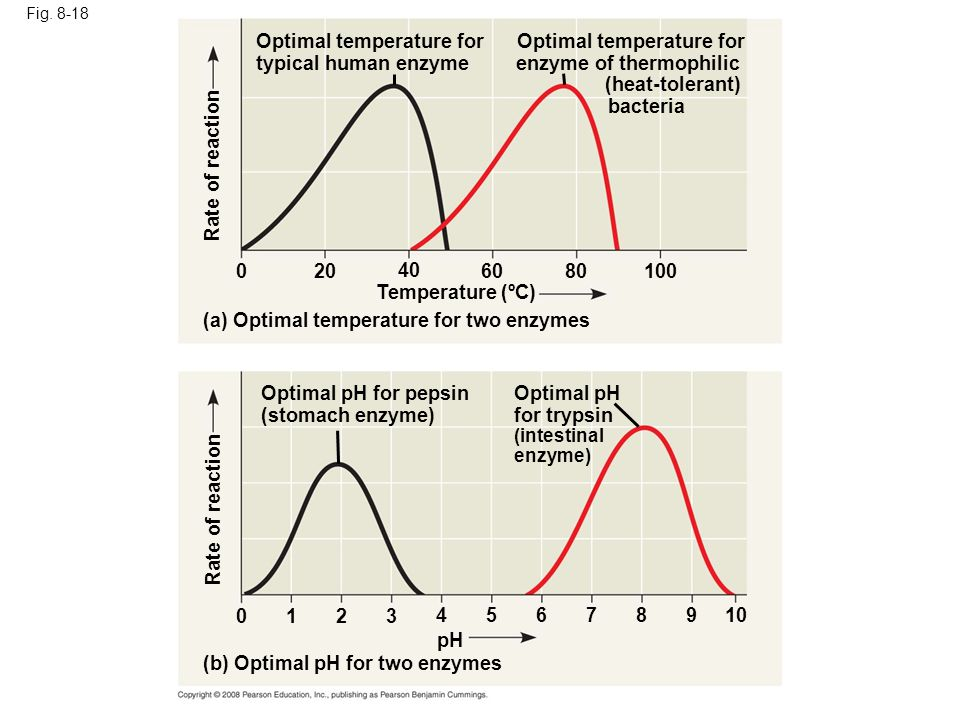 Optimal temperature for typical human enzyme Optimal temperature for