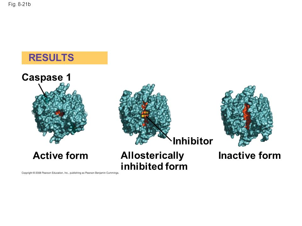 RESULTS Caspase 1 Inhibitor Active form Allosterically inhibited form