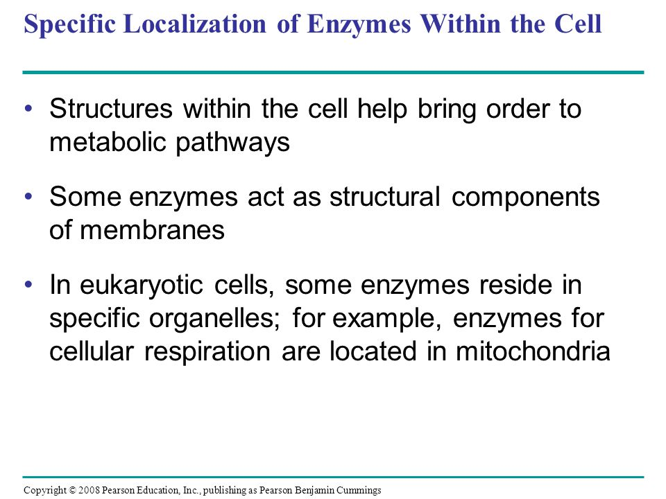 Specific Localization of Enzymes Within the Cell
