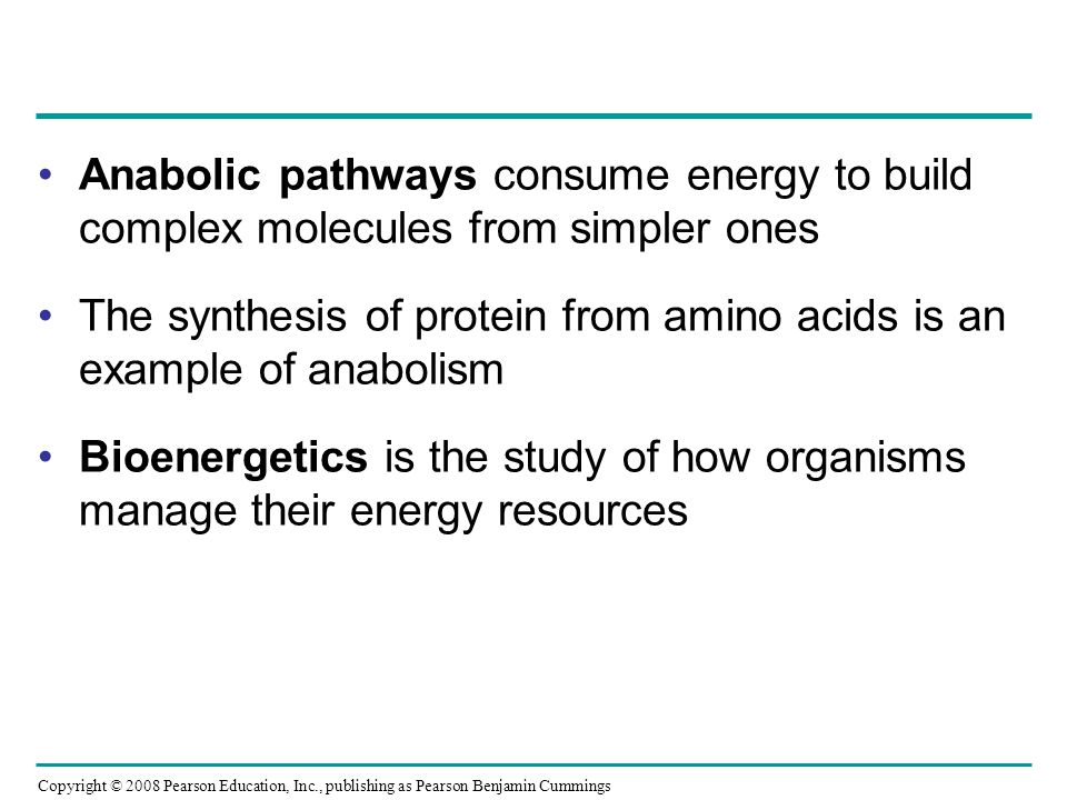 The synthesis of protein from amino acids is an example of anabolism