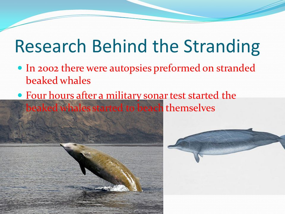 Research Behind the Stranding
