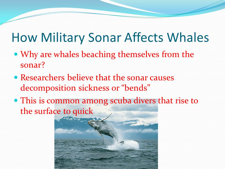 How Military Sonar Affects Whales
