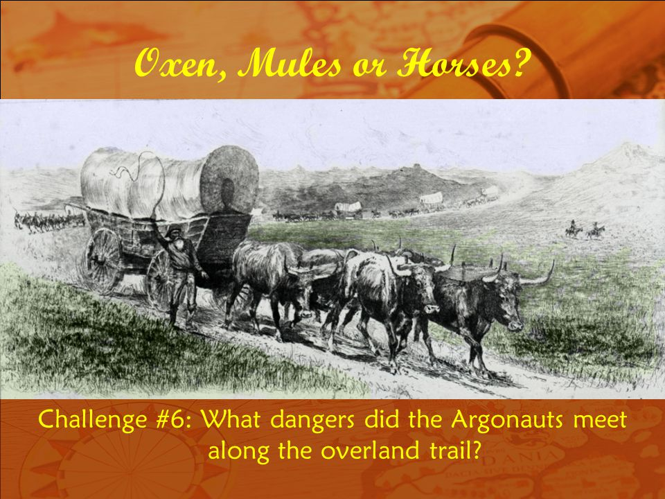 Oxen, Mules or Horses Challenge #6: What dangers did the Argonauts meet along the overland trail