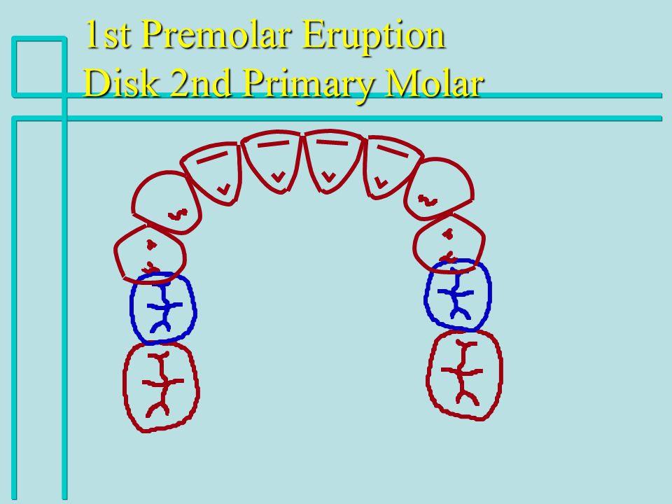 1st Premolar Eruption Disk 2nd Primary Molar