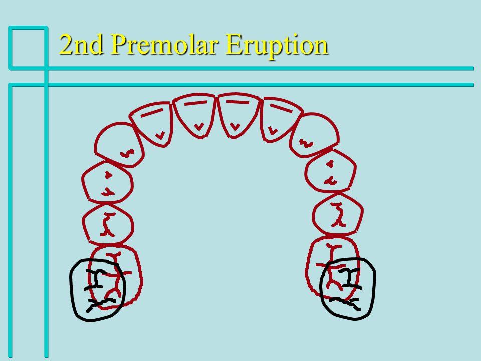 2nd Premolar Eruption