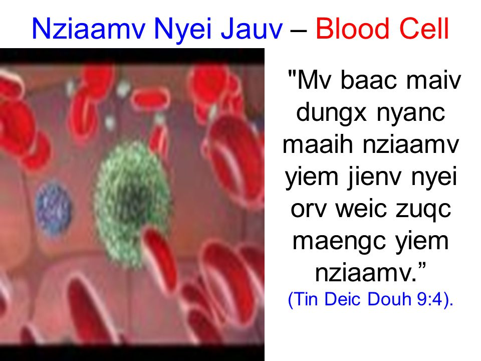 Nziaamv Nyei Jauv – Blood Cell