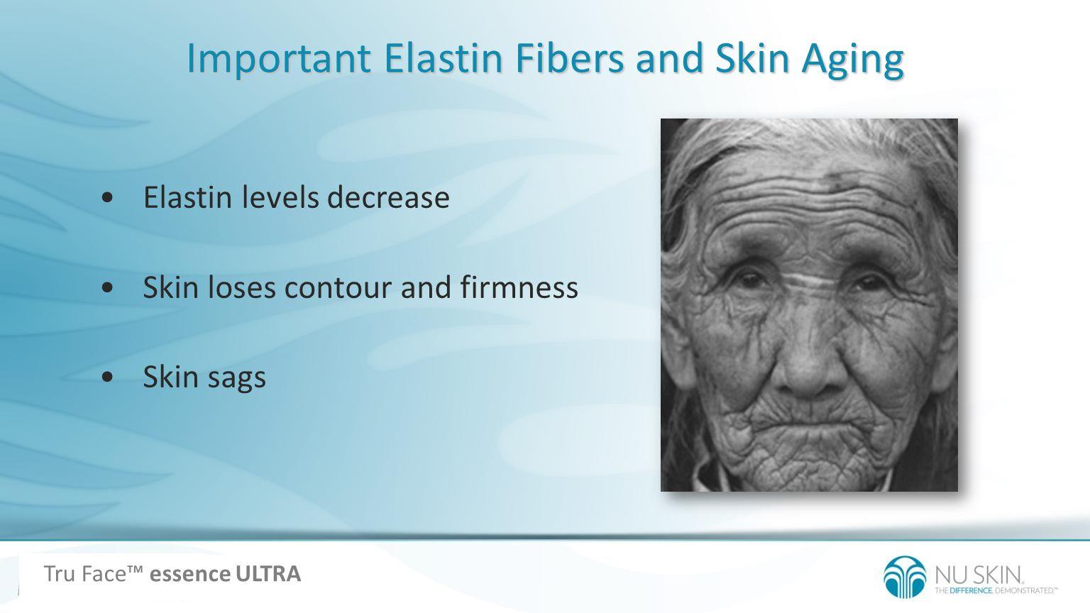 Important Elastin Fibers and Skin Aging