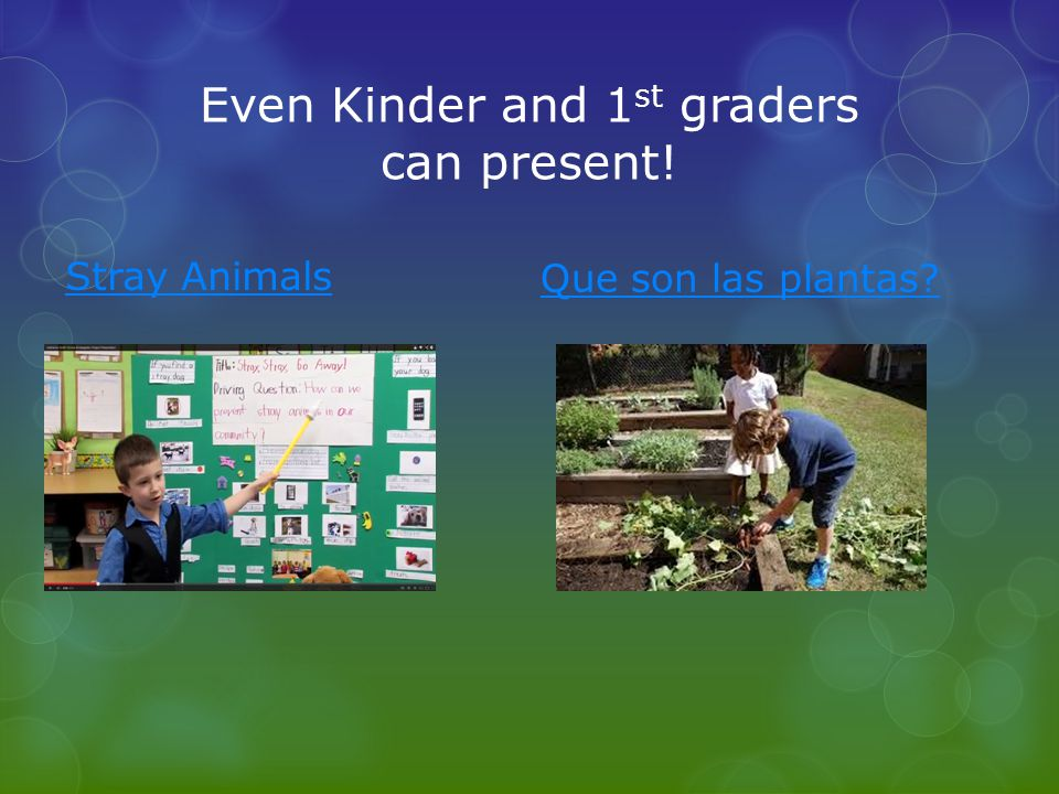 Even Kinder and 1st graders can present!