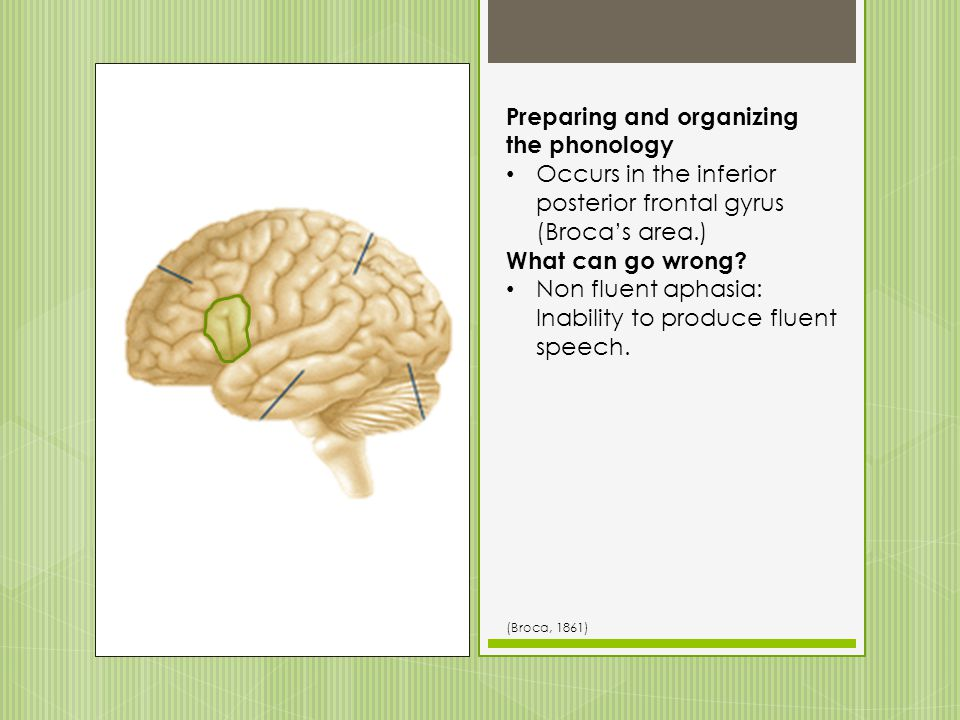 Preparing and organizing the phonology