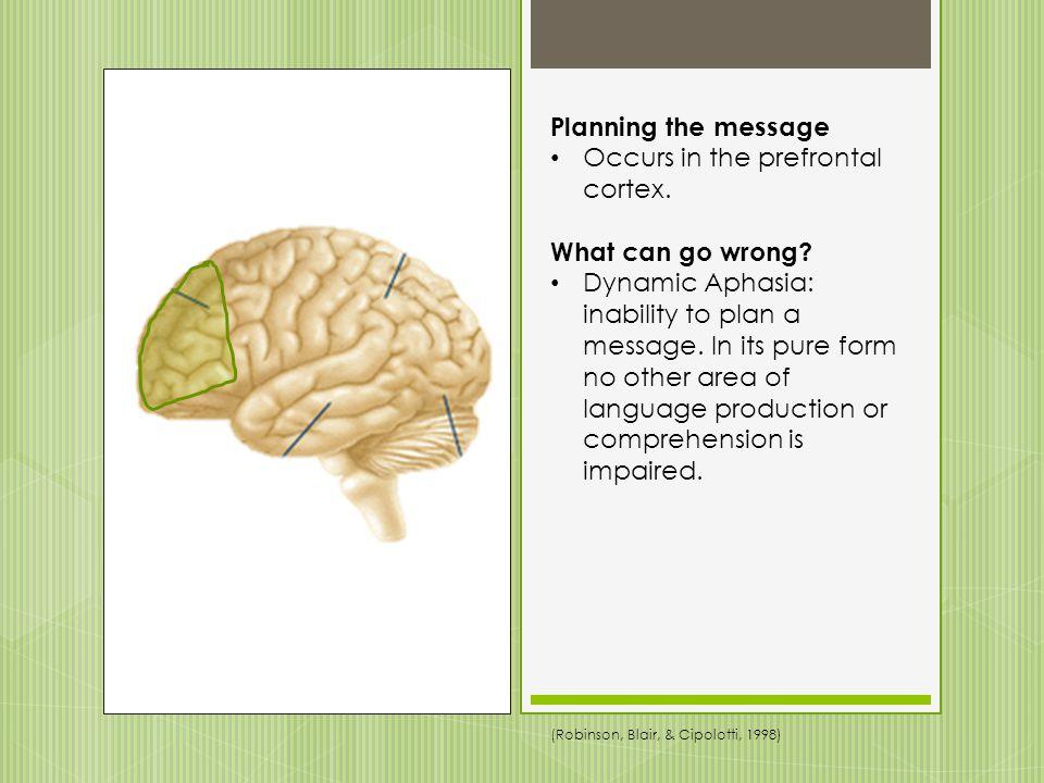 Occurs in the prefrontal cortex.