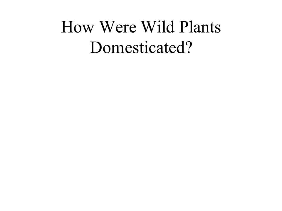 How Were Wild Plants Domesticated