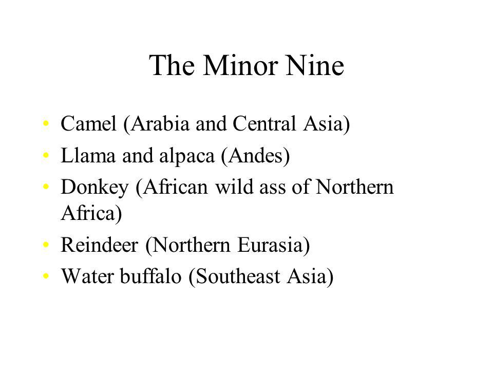 The Minor Nine Camel (Arabia and Central Asia)