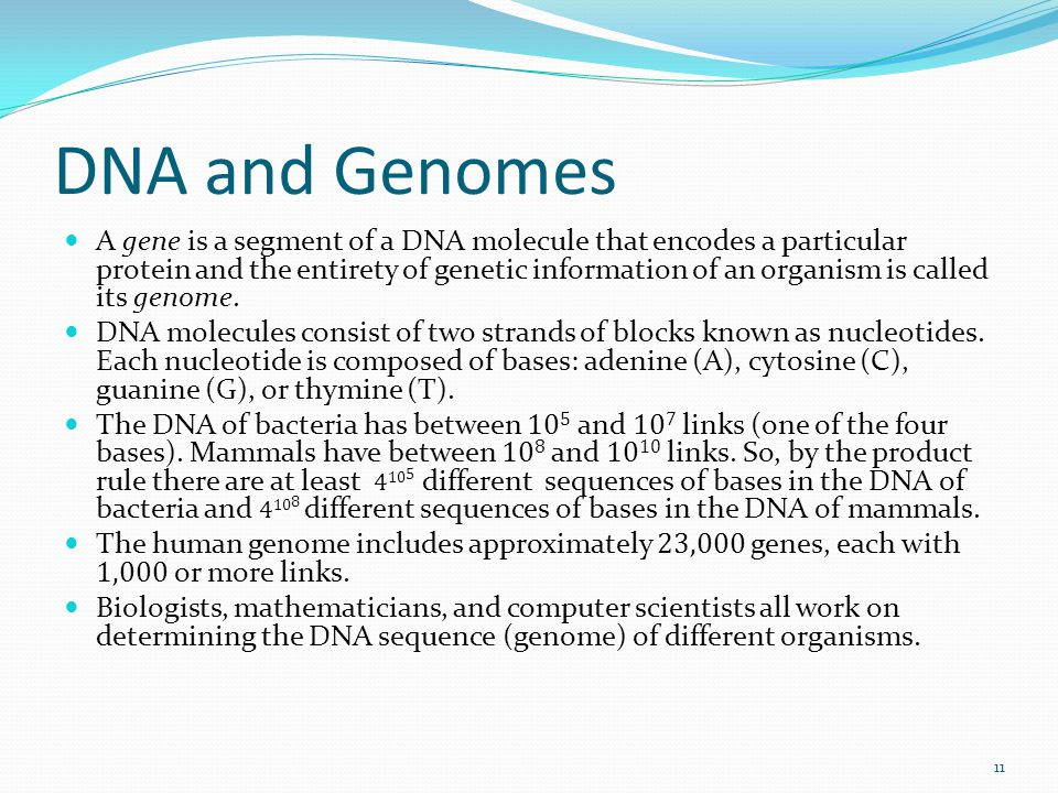 DNA and Genomes