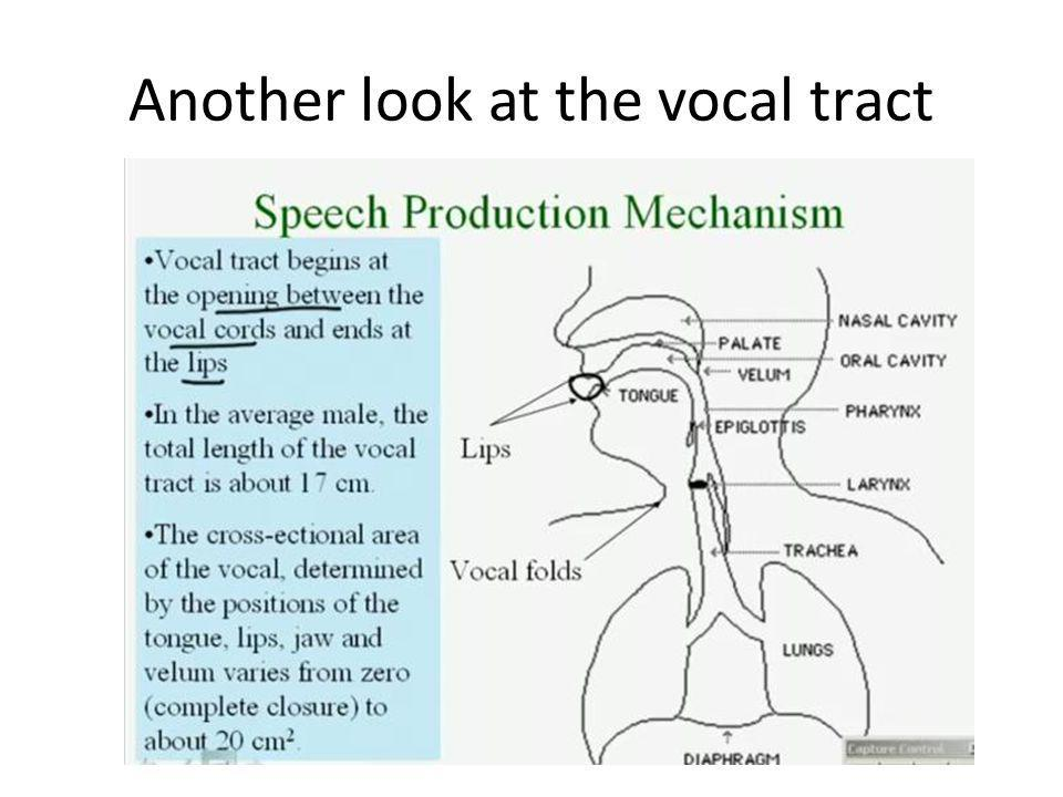 Another look at the vocal tract