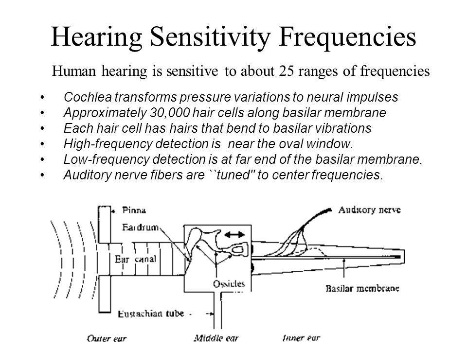 Hearing Sensitivity Frequencies