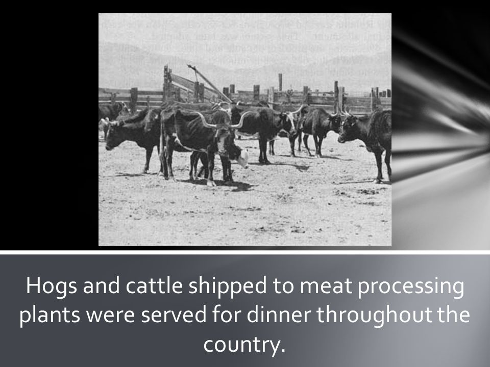 Hogs and cattle shipped to meat processing plants were served for dinner throughout the country.