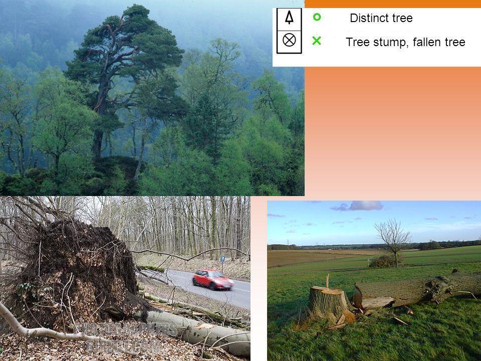 Distinct tree Tree stump, fallen tree