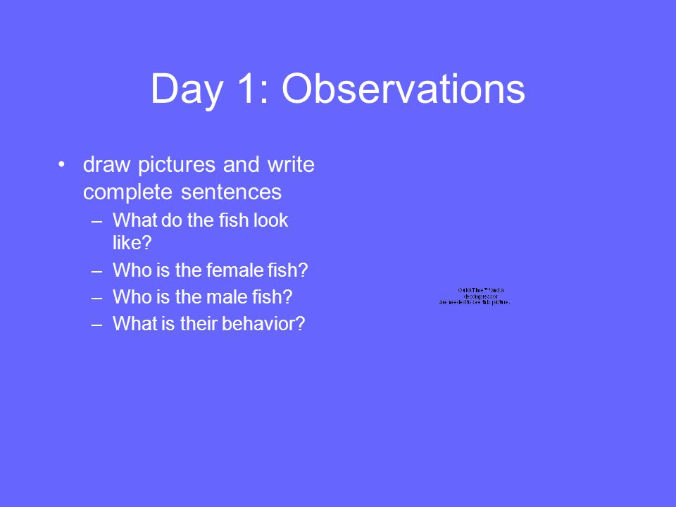 Day 1: Observations draw pictures and write complete sentences