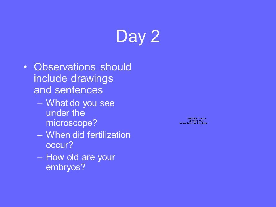 Day 2 Observations should include drawings and sentences