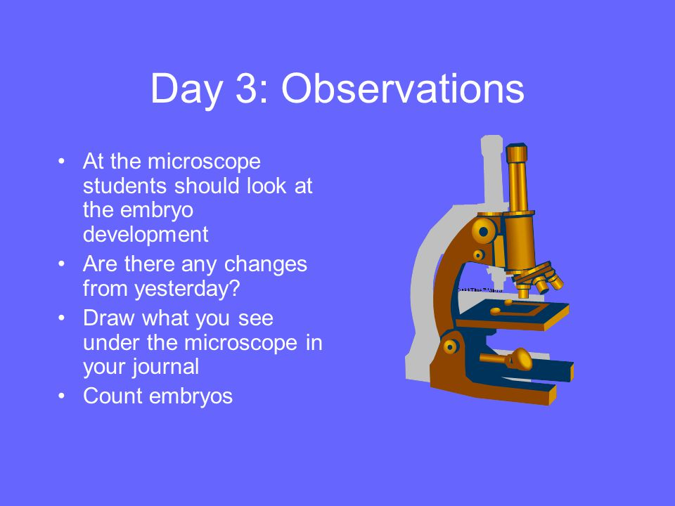 Day 3: Observations At the microscope students should look at the embryo development. Are there any changes from yesterday