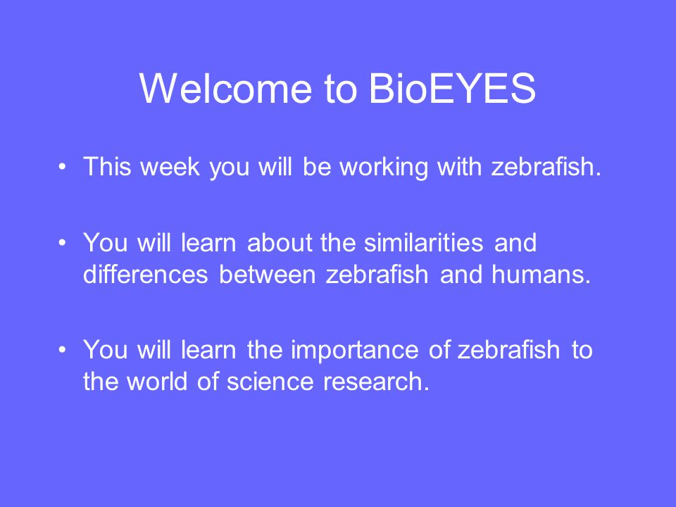 Welcome to BioEYES This week you will be working with zebrafish.