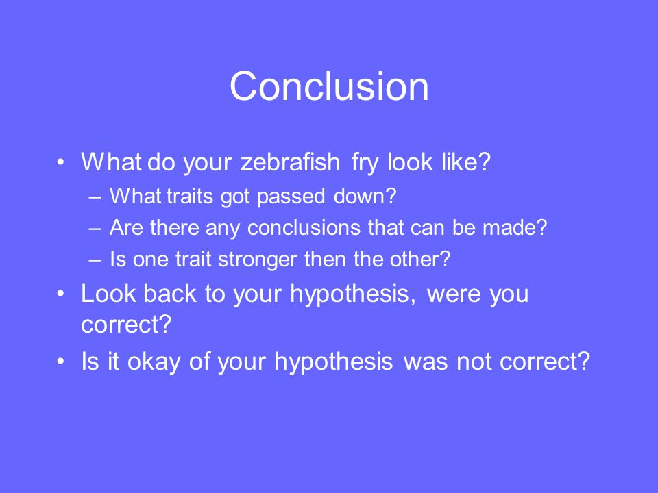 Conclusion What do your zebrafish fry look like