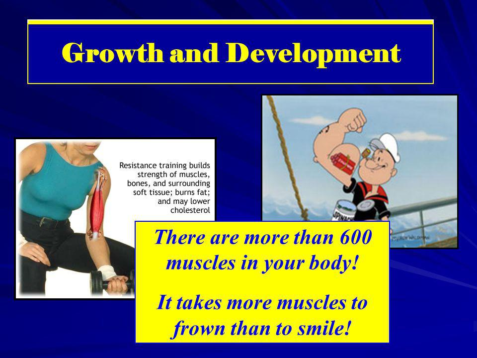 Muscular System Growth and Development