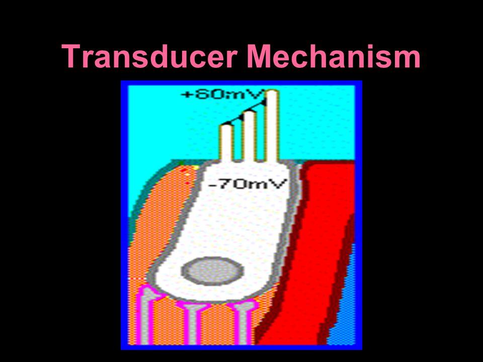 Transducer Mechanism