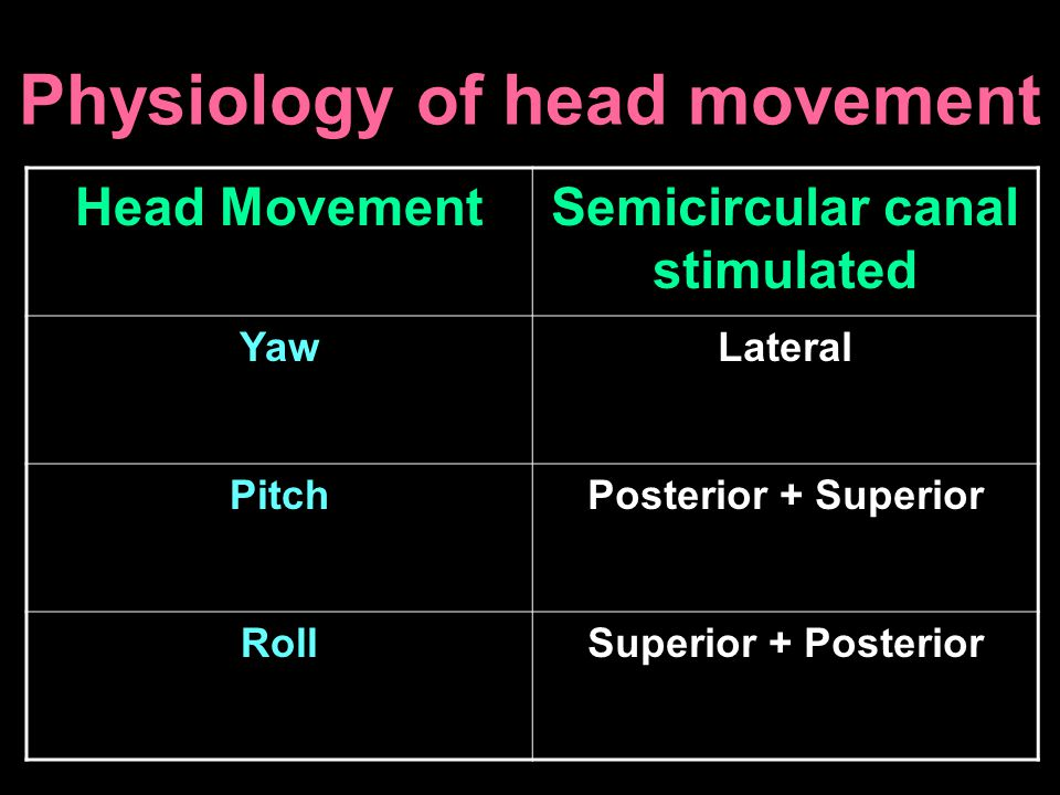 Physiology of head movement