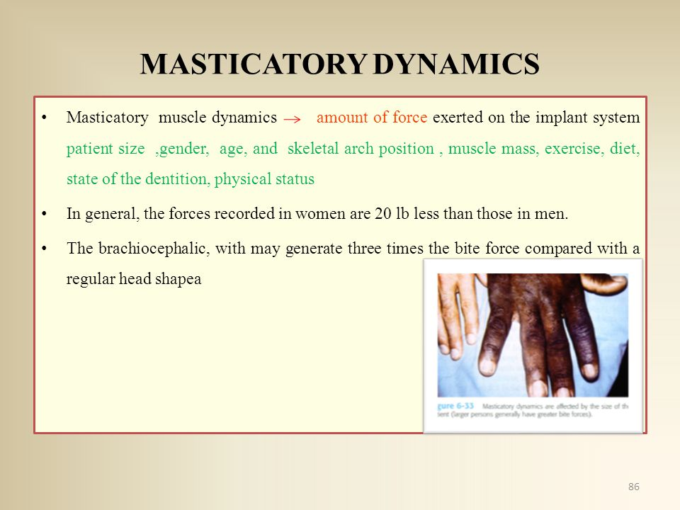 MASTICATORY DYNAMICS