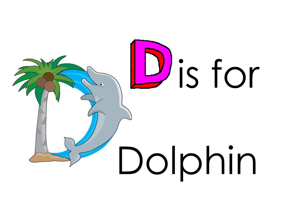 is for Dolphin